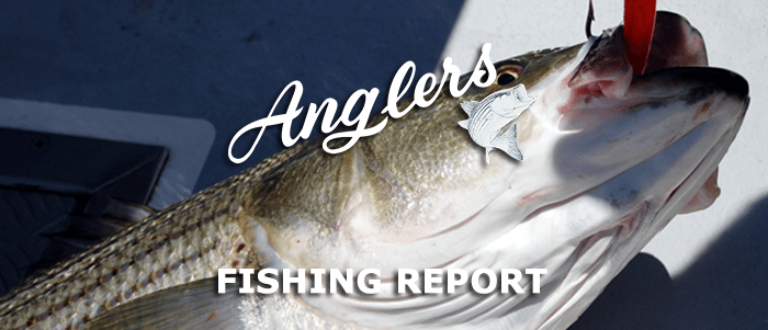 Anglers Fishing Report