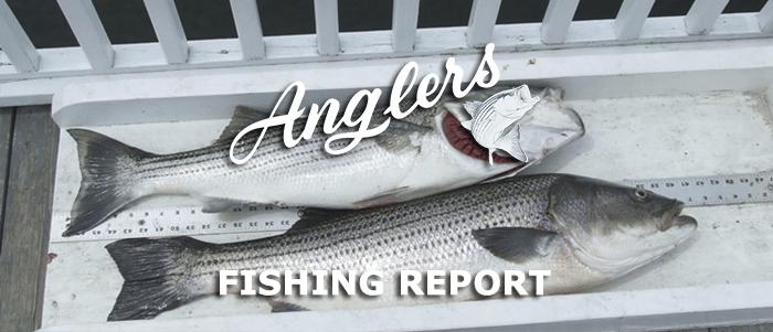 bay fishing report