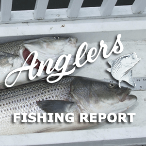 bay fishing report