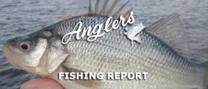 Fall Chesapeake Bay Fishing Report