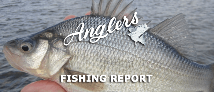 Fall Chesapeake Bay Fishing Report