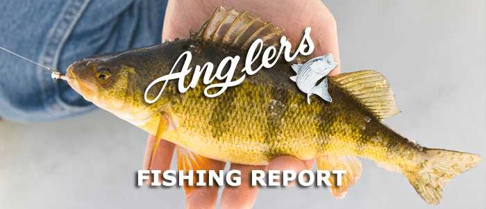 Chesapeake Bay Fishing Report March
