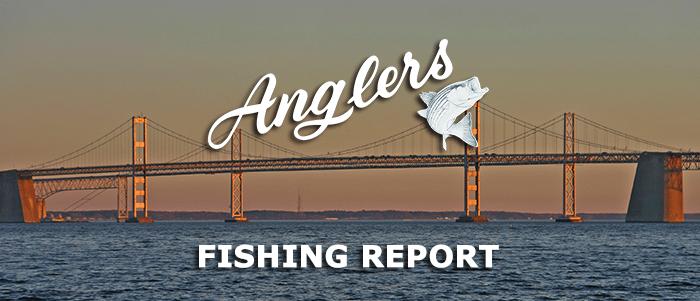 Maryland Fishing Report