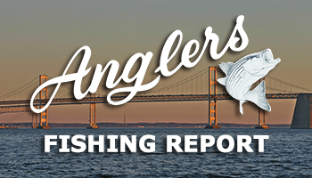 Chesapeake Bay Maryland Fishing Report April 7th 2015