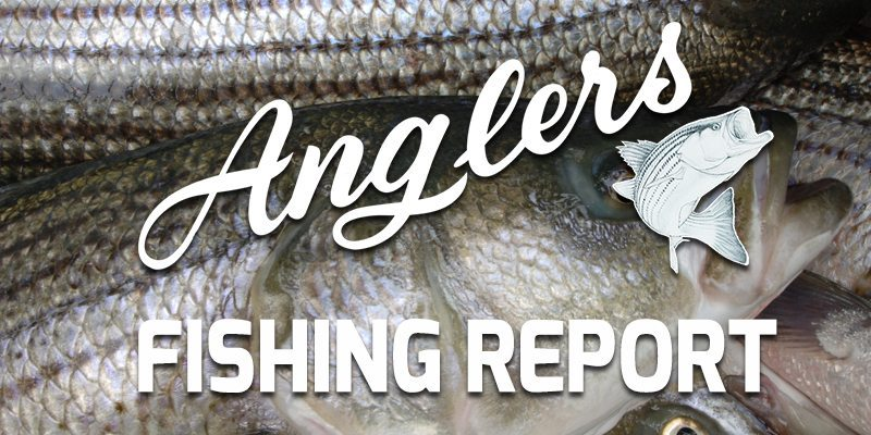 Chesapeake Bay Fishing Report May 28th 2015