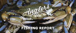 june 12th bay fishing report