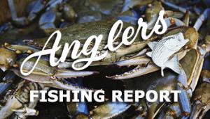 june 12th bay fishing report thumbnail