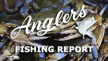 june 12th bay fishing report thumbnail