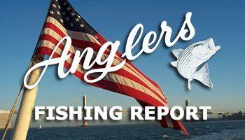 Chesapeake Bay Fishing Report June 30th 2015