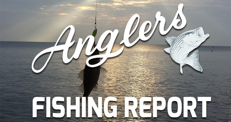 Chesapeake Bay Fishing Report July 20, 2015