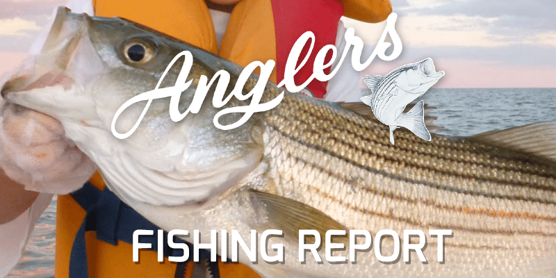 Chesapeake Bay Fishing Report August 28, 2015