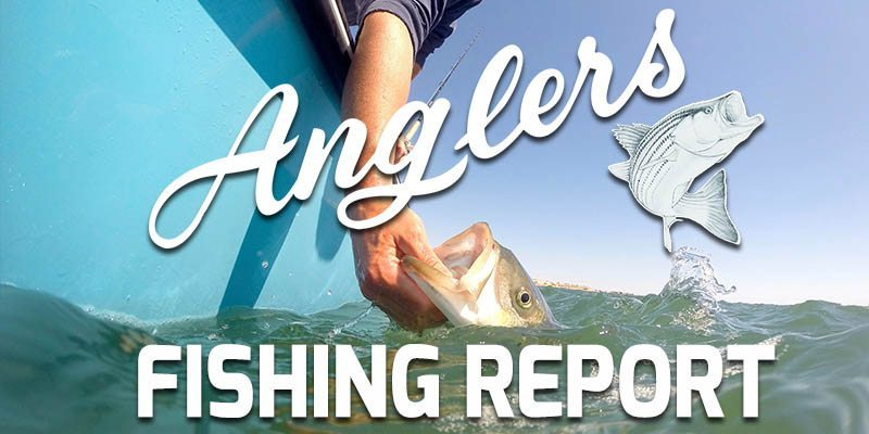 Anglers Chesapeake Bay Fishing Report 9.17 Featured
