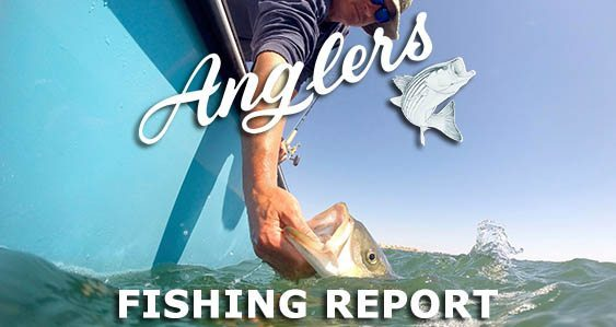 Anglers Chesapeake Bay Fishing Report 9.17