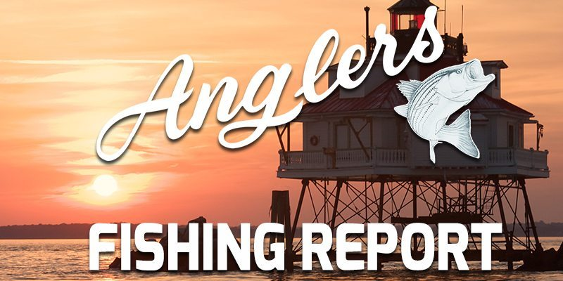 Featured Image Anglers Chesapeake Bay Fishing Report 10-19-2015