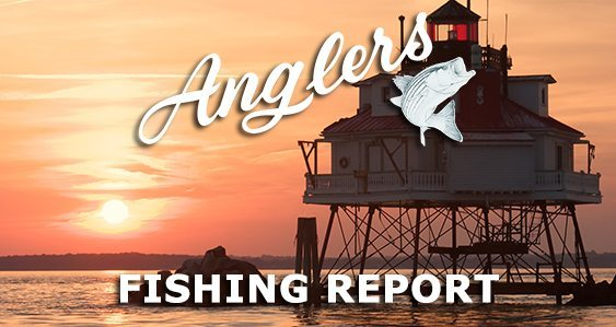 Main Image Anglers Chesapeake Bay Fishing Report 10-19-2015