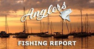 Anglers Chesapeake Fishing Report 03/19/2016