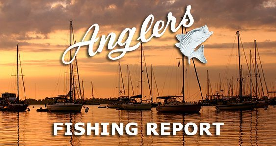 Anglers Chesapeake Bay Fishing Report 10-5-201