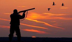 Sportsman duck hunting
