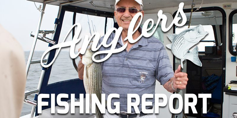 Chesapeake Bay Fishing Report featured image 11.5