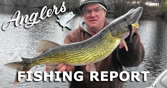 Anglers Chesapeake Bay Fishing Report November 16th