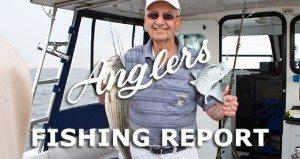 Chesapeake Bay Fishing Report main image 11.5