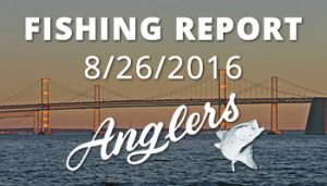 Anglers Fishing Report August 26th, 2016
