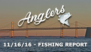 Chesapeake Bay Fishing report Anglers Sport Center