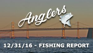 Chesapeake Bay Fishing Report from Anglers Sport Center