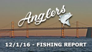 Anglers Sport Center Chesapeake Bay Fishing Report