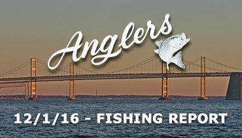 Anglers Sport Center Chesapeake Bay Fishing Report