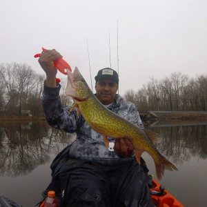 Pickerel Fishing in the Chesapeake Bay area Anglers Sport Center