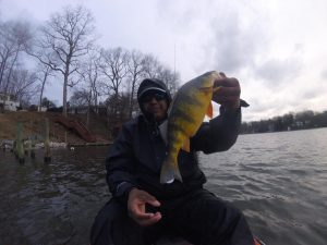 Yellow Perch Fishing Chesapeake Bay Anglers Sport Center