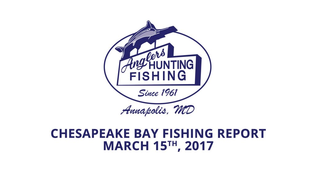 Chesapeake Bay Fishing Report - March 15th 2017