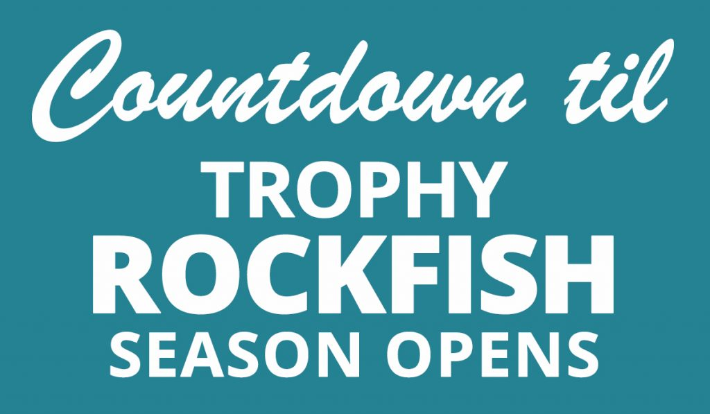 Countdown to Trophy Rockfish Season