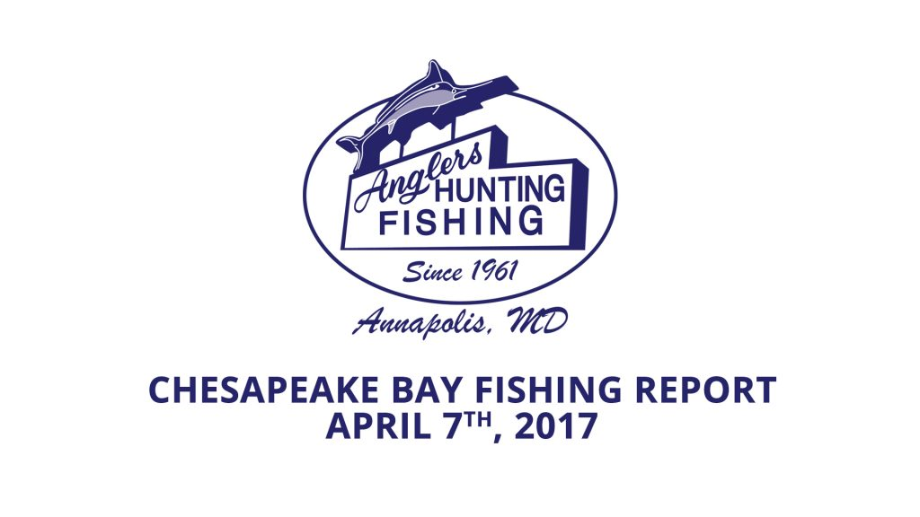Chesapeake Bay Fishing Report - April 7th, 2017