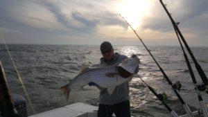 Trophy Rockfish caught trolling the Chesapeake bay.