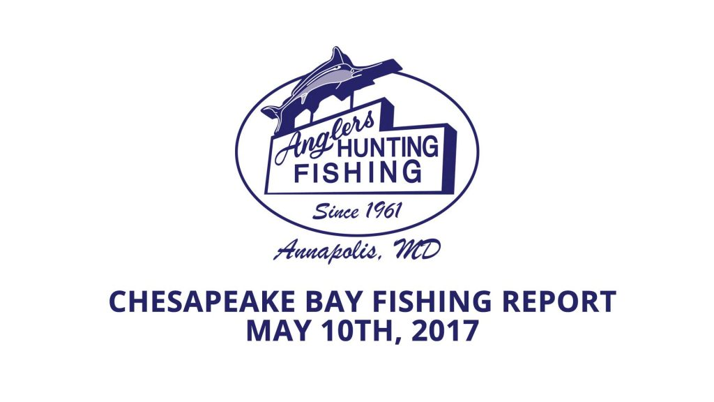 Fishing Report for the Chesapeake Bay area Anglers Sport Center
