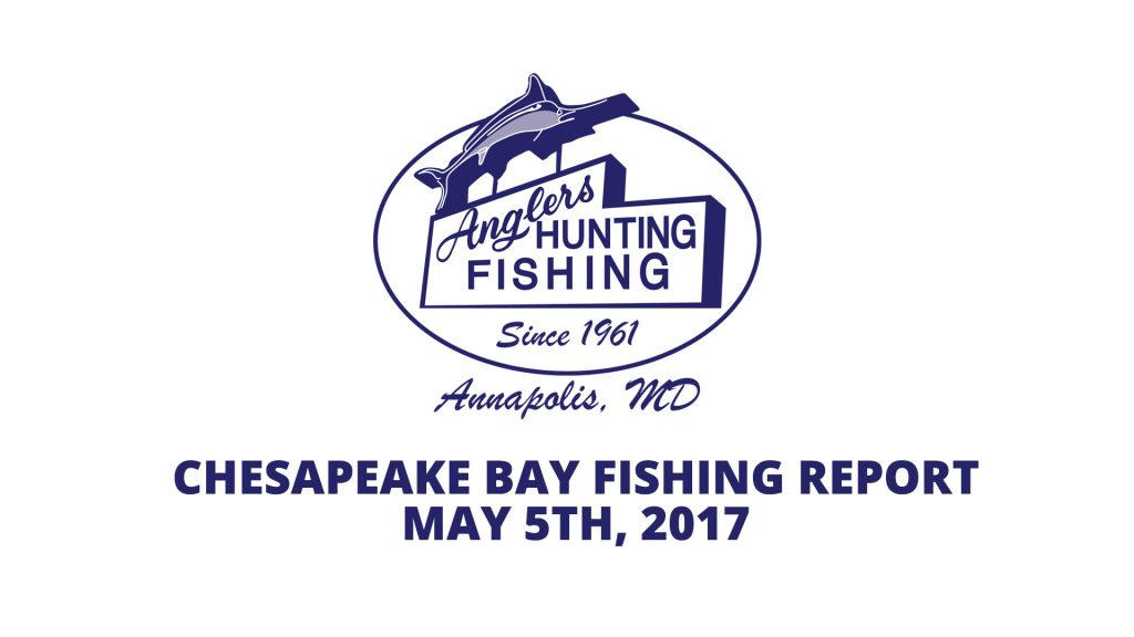 Chesapeake Bay Fishing Report Anglers Sport Center Annapolis Maryland