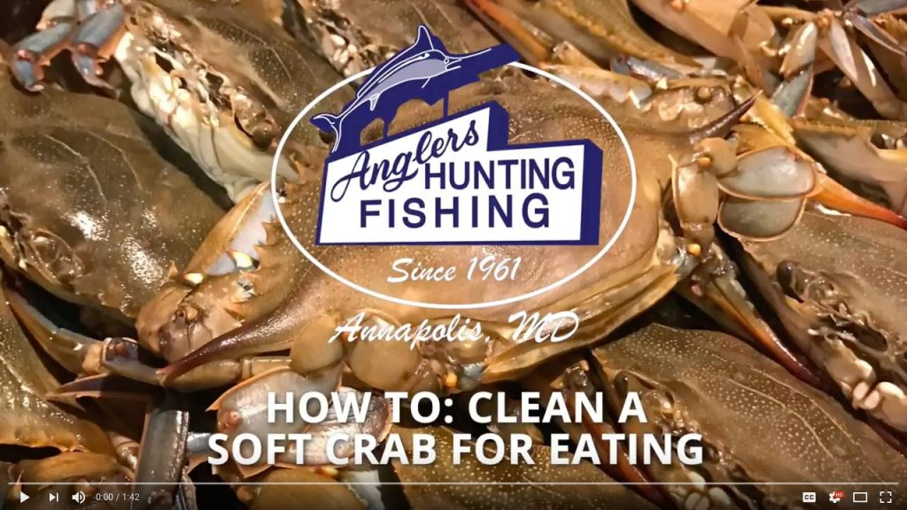 How to: Clean a Soft Crab for eating