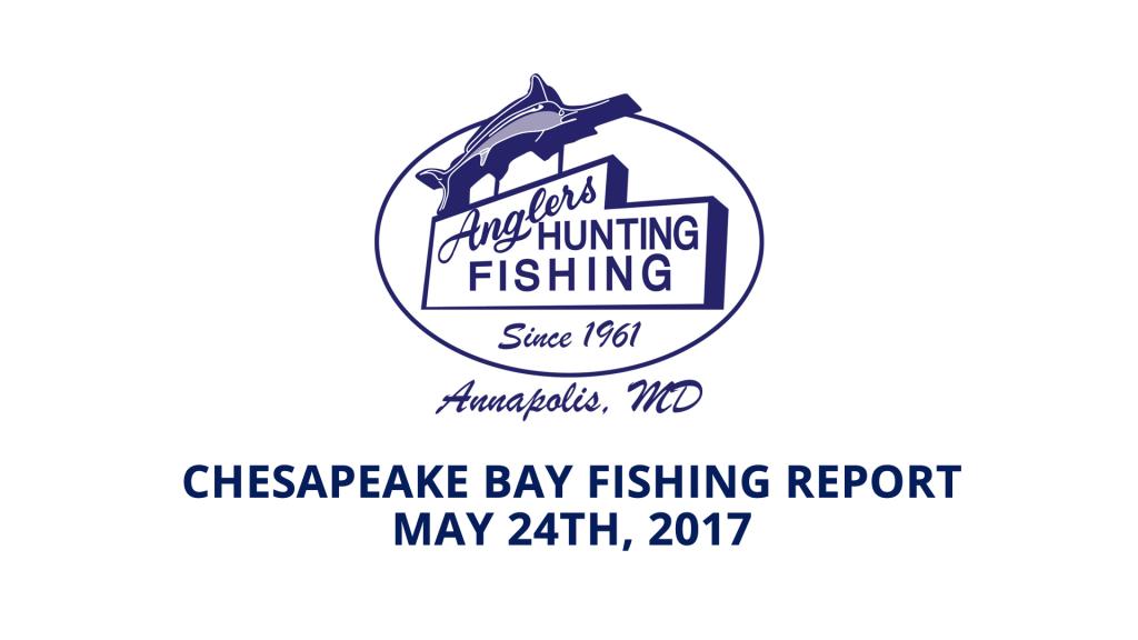 Chesapeake Bay Fishing Report - May 24th, 2017