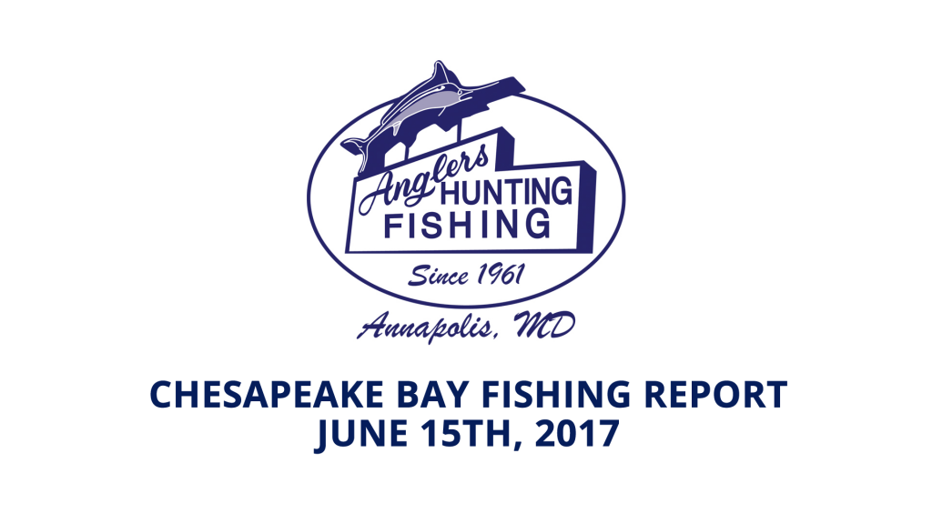 Chesapeake Bay Fishing Report - June 15th, 2017