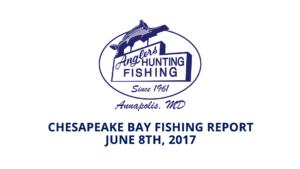 Anglers Fishing Report Chesapeake Bay Maryland