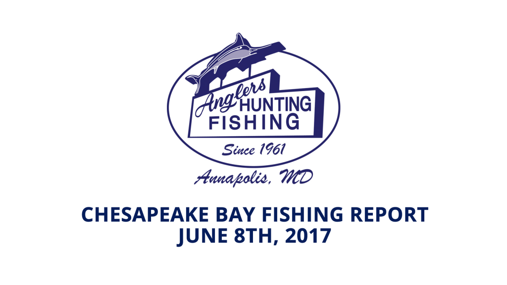 Chesapeake bay fishing report june 8th 2017 anglers for Md fishing license