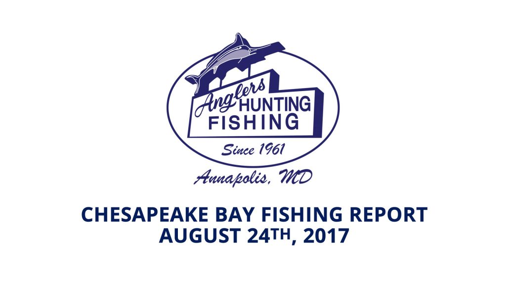 Chesapeake Bay Fishing Report - August 24th, 2017