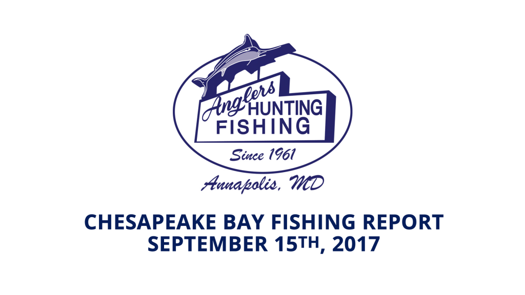 Chesapeake Bay Fishing Report - September 15th, 2017