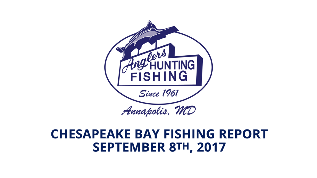 Chesapeake Bay Fishing Report - September 8th, 2017