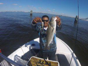 Chesapeake Bay Fishing Live Target Swimbaits
