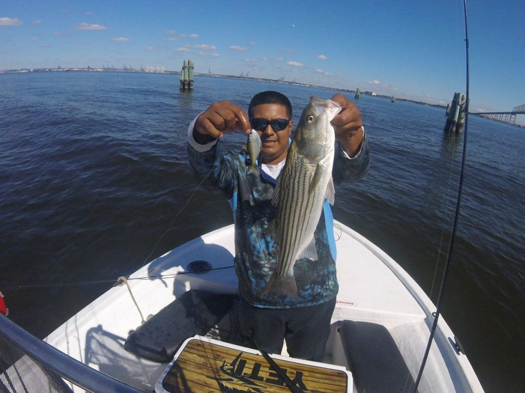 Chesapeake Bay Fishing Live Target Swimbaits