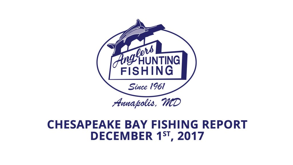 Chesapeake Bay Fishing Report - December 1st, 2017