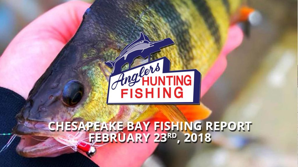 Chesapeake Bay Fishing Report - February 23rd, 2018